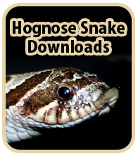 Hognose Snake Downloads